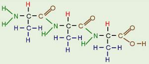 Protein molecule Image source: http://biology.clc.uc.edu/